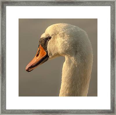 Framed Print featuring the photograph Thoughts That Warms The Heart by Rose-Maries Pictures