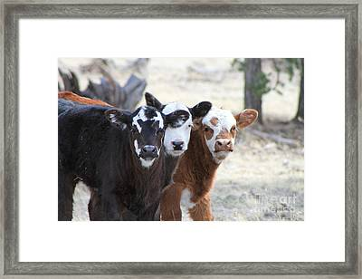 Three Amigos 1 Framed Print