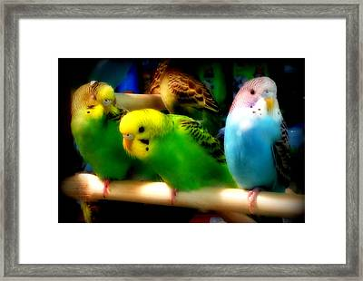 Framed Print featuring the photograph Three Amigos by Aurelio Zucco