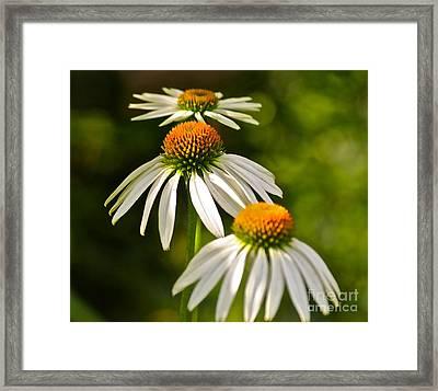 Three Amigos Framed Print by Eve Spring