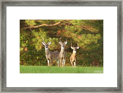 Three Amigos Framed Print by Robert Camp