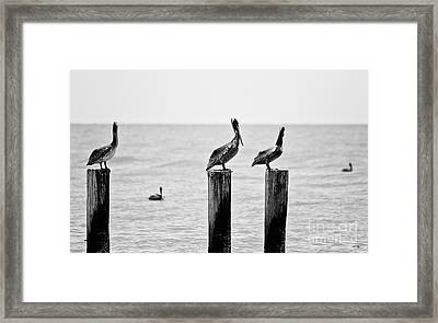 Three Amigos Framed Print by Scott Pellegrin