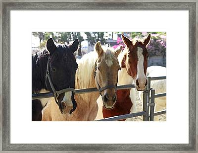 Three Amigos Framed Print by Shoal Hollingsworth
