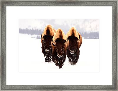 Three Amigos Framed Print by Steve Hinch