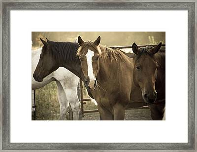Framed Print featuring the photograph Three Amigos by Steven Bateson