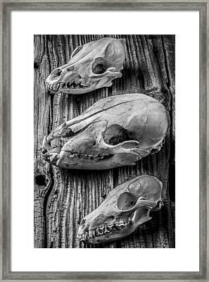 Three Animal Skulls # 2 Framed Print