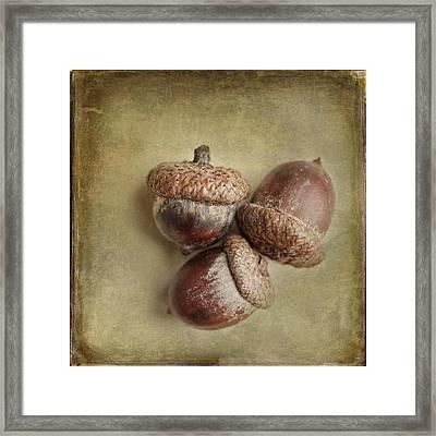Three Autumn Acorns Framed Print by Lisa Russo