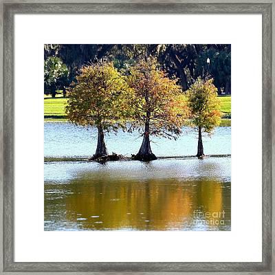 Three Autumn Cypress Trees Framed Print by Carol Groenen