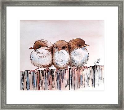 Three Baby Fairy Wrens Framed Print