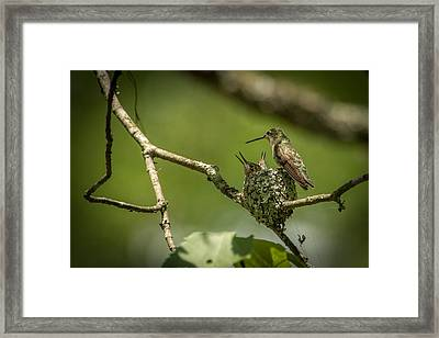 Three Beaks Framed Print