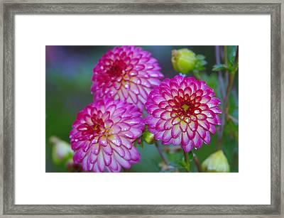 Three Beauties Framed Print by Jeff Swan