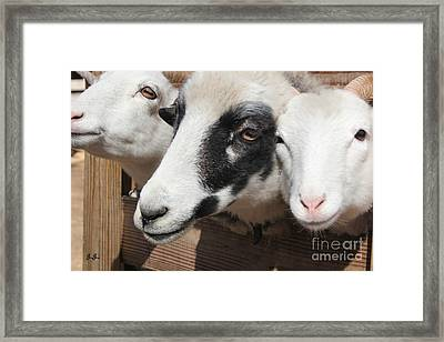 Framed Print featuring the photograph Three Bills by Geri Glavis