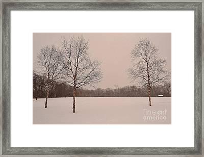 Three Birch Trees In Winter Framed Print