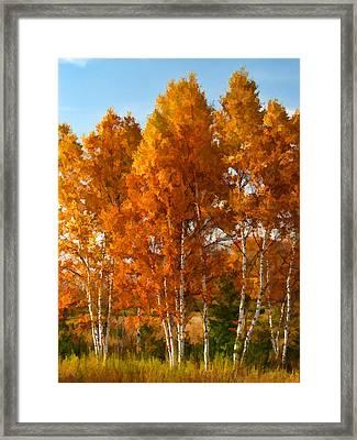 Three Birches Framed Print by Christopher Arndt