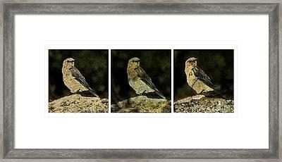 Three Birds Framed Print by John Goyer