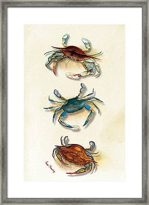 Three Blue Crabs Framed Print by Anne Beverley-Stamps