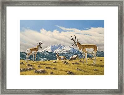 Three Bucks On The Ridge Framed Print by Paul Krapf