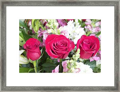 Three Buds Framed Print by M West