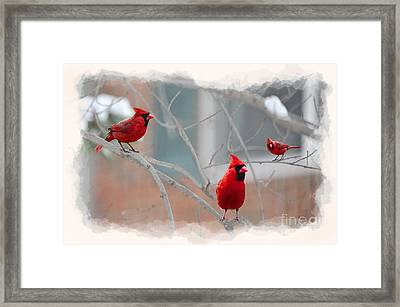 Framed Print featuring the photograph Three Cardinals In A Tree by Dan Friend