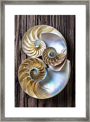 Three Chambered Nautilus Framed Print by Garry Gay