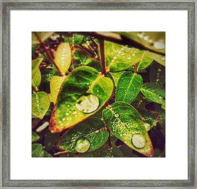 Three Coins In The Fountain Framed Print