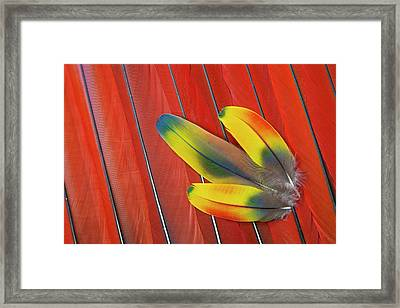 Three Covert Feathers Laying On Scarlet Framed Print by Darrell Gulin