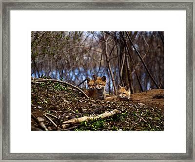 Three Cute Kit Foxes 3 Framed Print