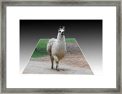 Three D Lama Framed Print