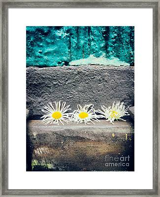 Framed Print featuring the photograph Three Daisies Stuck In A Door by Silvia Ganora
