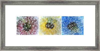 Three Dandelions In A Line Framed Print