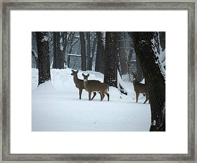 Framed Print featuring the photograph Three Deer In Park by Eric Switzer