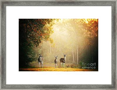 Three Deer Framed Print