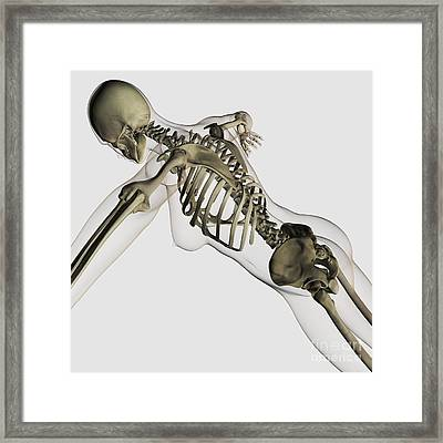 Three Dimensional View Of Female Spine Framed Print by Stocktrek Images
