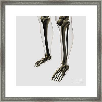 Three Dimensional View Of Human Leg Framed Print by Stocktrek Images