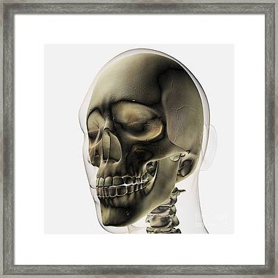 Three Dimensional View Of Human Skull Framed Print by Stocktrek Images
