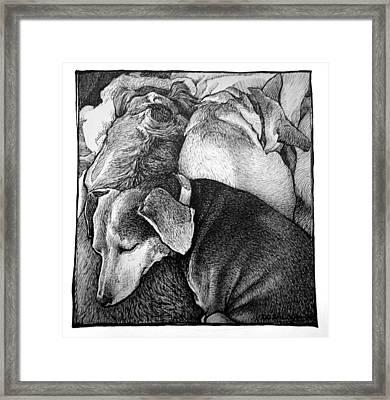 Three Dog Night Framed Print