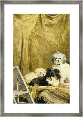 Three Dogs Framed Print by Charles van den Eycken