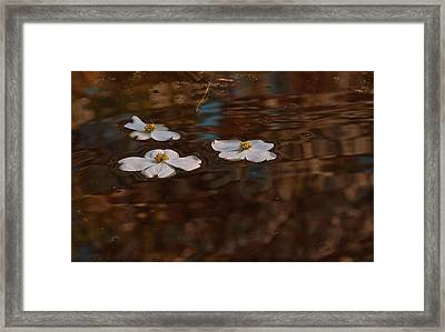 Framed Print featuring the photograph Three Dogwood Blooms In A Pond  by John Harding