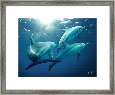 Three Dolphins Of Tampa Bay Framed Print by IM Spadecaller