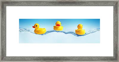 Three Ducks On Water Framed Print by Panoramic Images