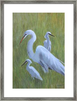 Three Egrets  Framed Print