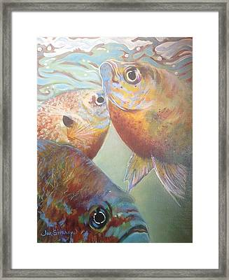 Three Fish Framed Print