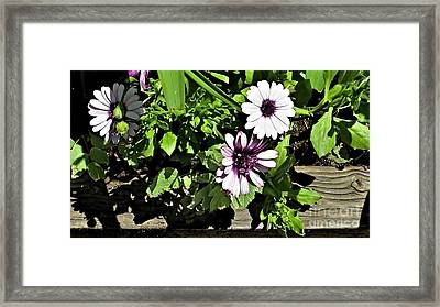 Three Flowers Framed Print by Claudette Bujold-Poirier