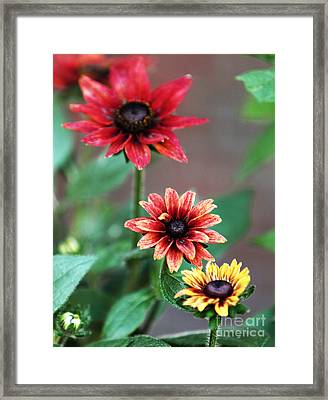 Three Flowers Framed Print by John Rizzuto