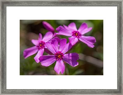 Three Flowers Framed Print