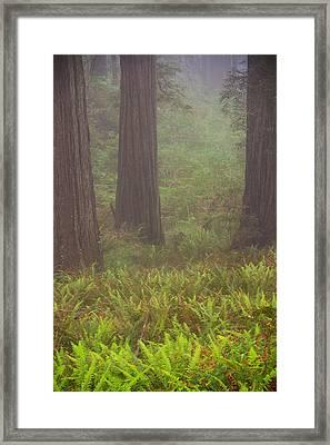 Three Foggy Muskeeters Framed Print