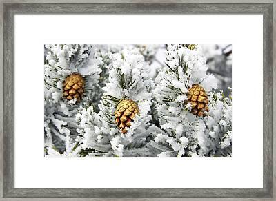 Three Frosty Cones Framed Print by Marilyn Hunt