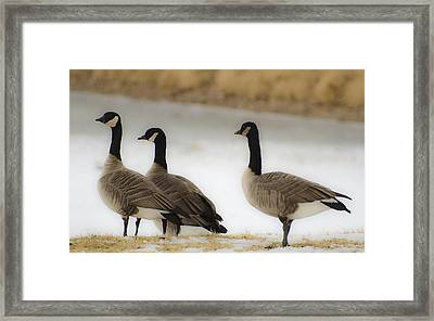 Three Geese Abstract Framed Print by Dave Dilli