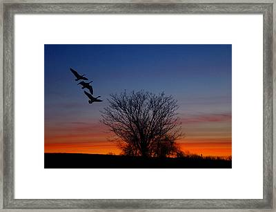 Three Geese At Sunset Framed Print by Raymond Salani III