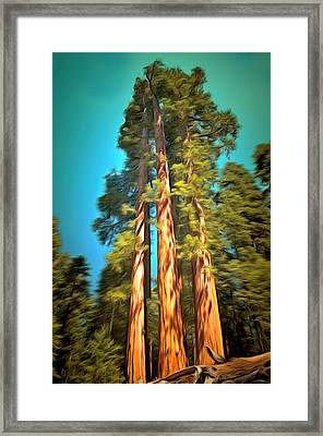 Three Giant Sequoias Digital Framed Print by Barbara Snyder
